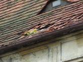 Dach kaplicy św. Barbary przed remontem (1)