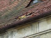 Dach kaplicy św. Barbary przed remontem (22)